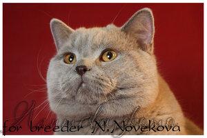 http://img-fotki.yandex.ru/get/4137/162753204.14/0_b8219_f9d9abfb_M.jpg