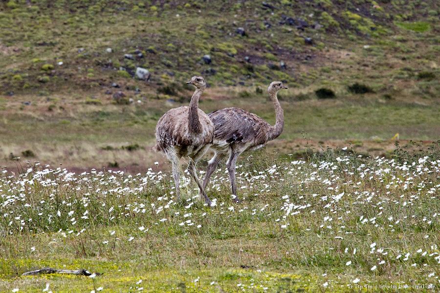 20. Восхождение к Голубым Башням и животный мир Южной Патагонии