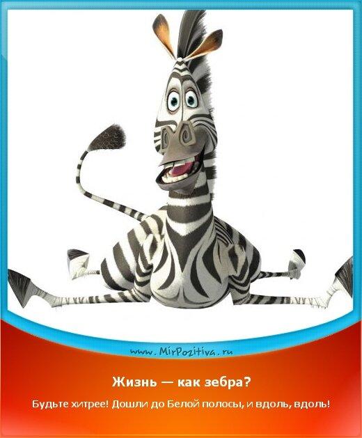 Позитивчик: Жизнь — как зебра? Будьте хитрее! Дошли до Белой полосы, и вдоль, вдоль!