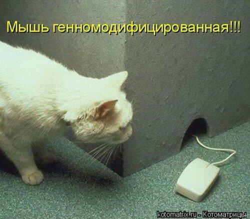 http://img-fotki.yandex.ru/get/4137/194408087.1/0_8f277_7251516b_L.jpg