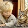 Как узнать сколько лет кошке