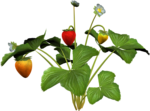 DBA STRAWBERRY PLANT 6.png