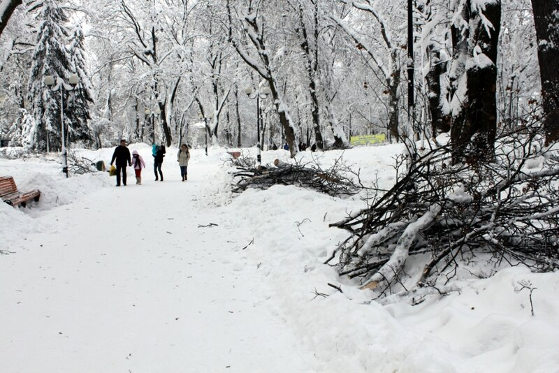 Сломанные ветви в Мариинском парке