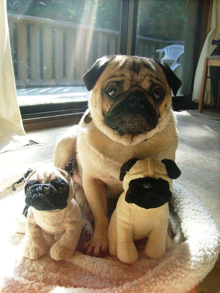 Мимимишечка: Животные с мягкими игрушками