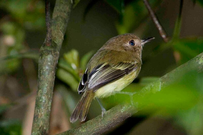 Птицы маленькие