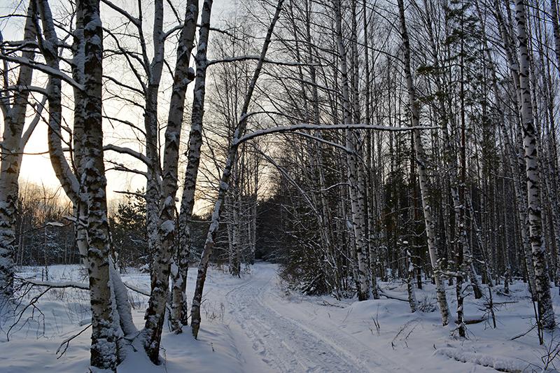зимний лес 17
