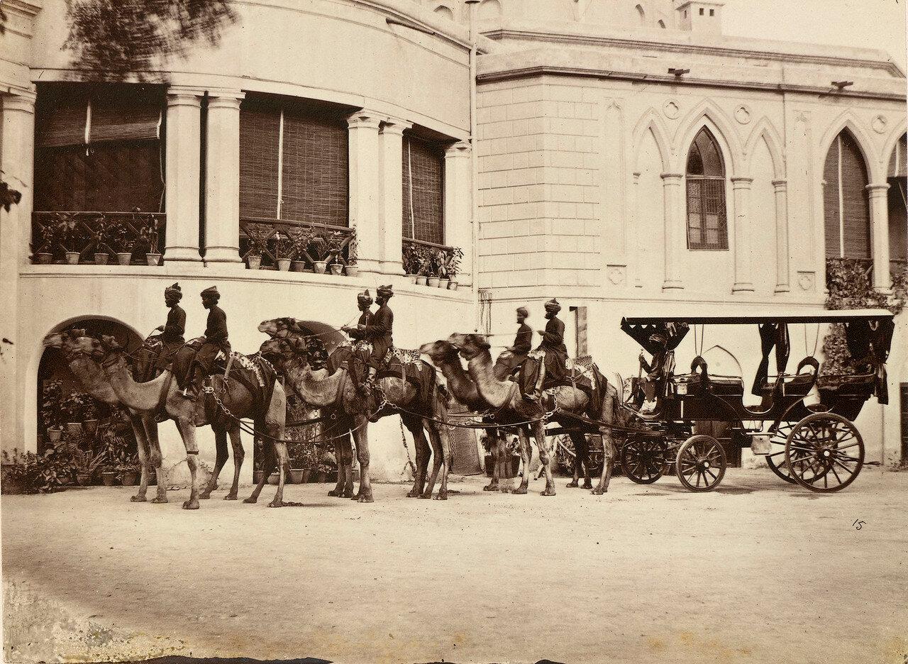 40. Запряженная верблюдами карета вице-губернатора Пенджаба