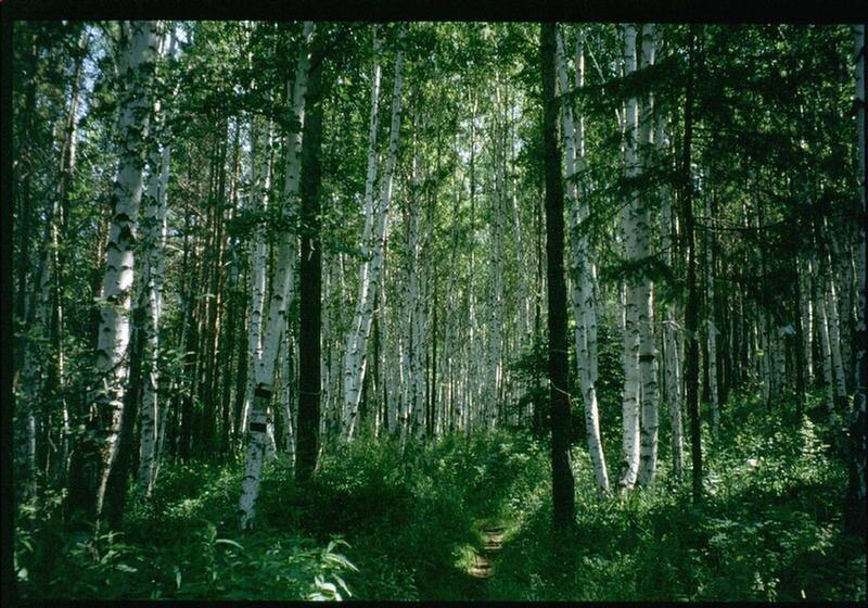 144. В лесу под Иркутском