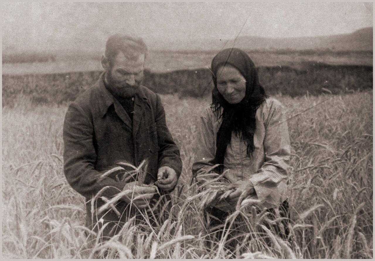 Дедушка с бабушкой в поле. 1950г.