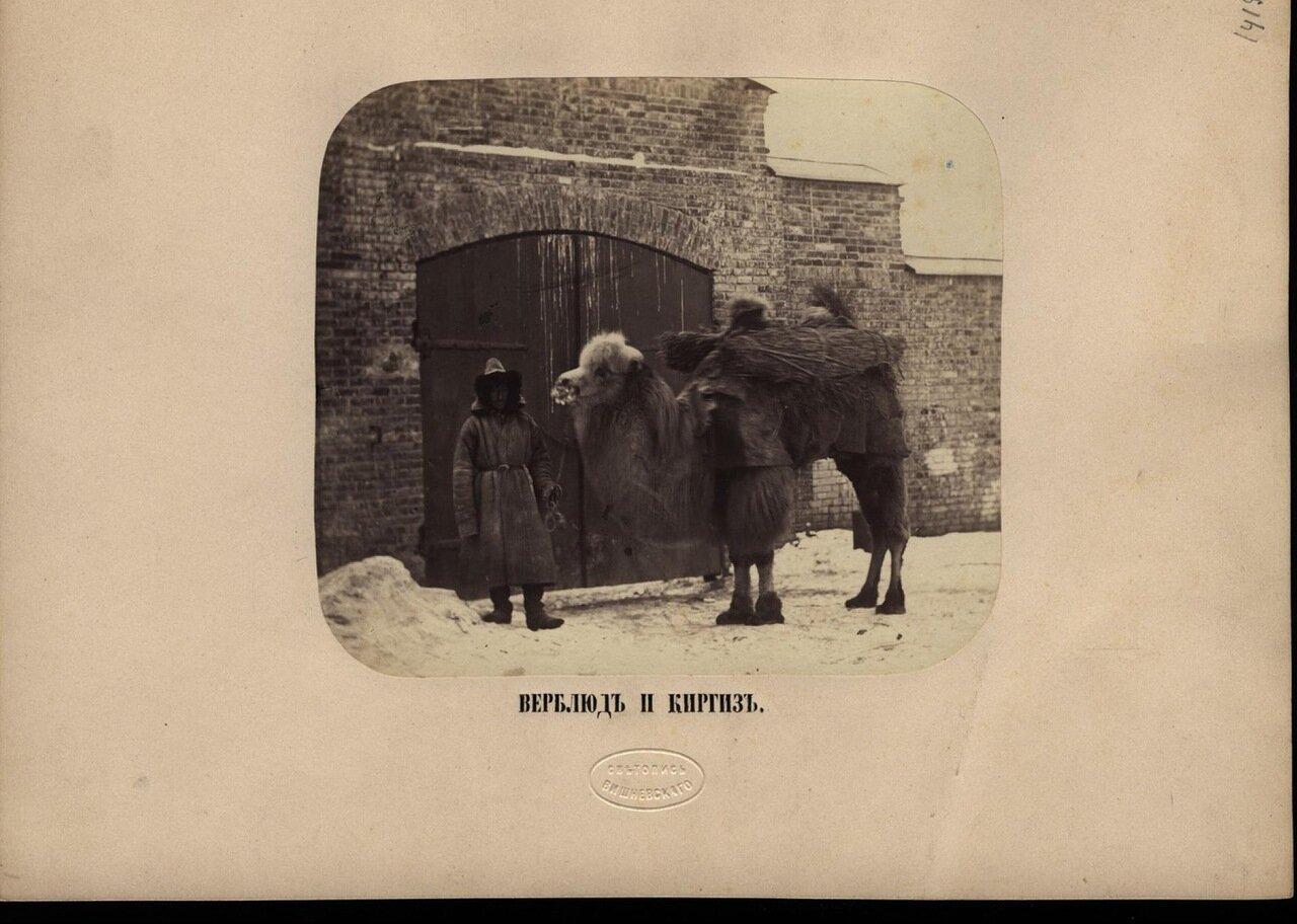 Верблюд и киргиз . Ателье «Светопись Вишневского».— Начало 1870-х