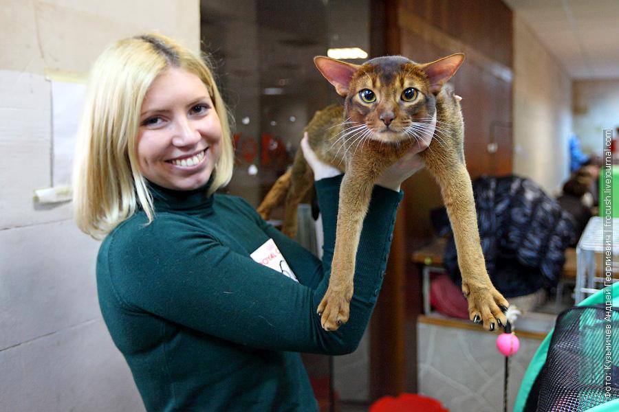 фотография Абиссинская кот