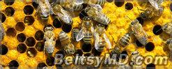 2012 — оказался очень тяжёлым для пчеловодов Молдовы