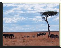 Кения. Масаи Мара