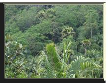 Сейшелы. О.Праслин. Национальный парк Valle de Mai