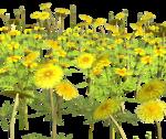 Lug_Grass_Flower (14).png