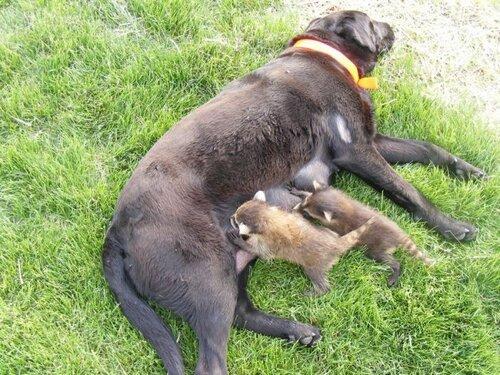Пропало молоко у собаки. Уход за новорожденными щенками