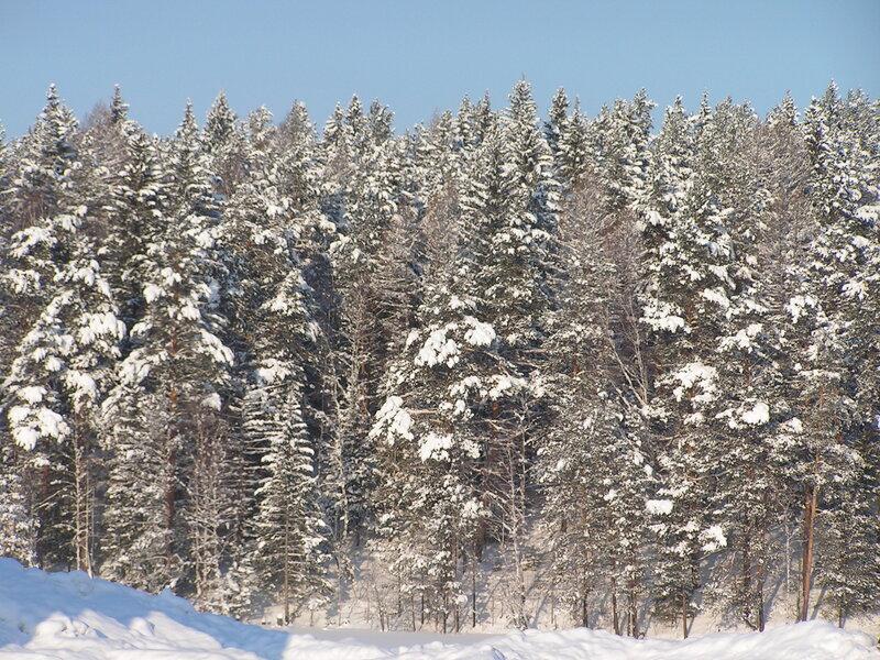 Куда ни посмотри - всюду снег и ёлки! (02.04.2013)