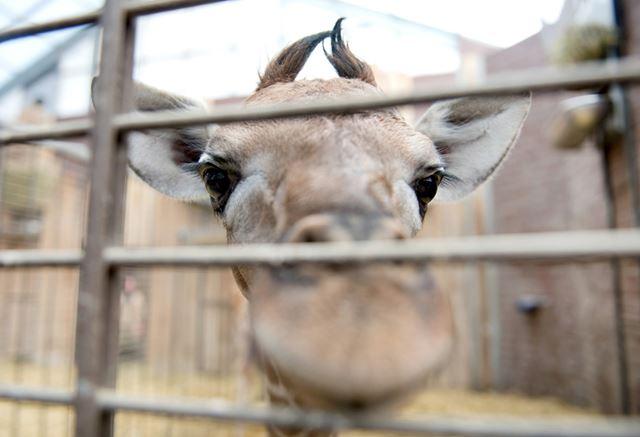 Зверюшки из зоопарков   интересные фотографии