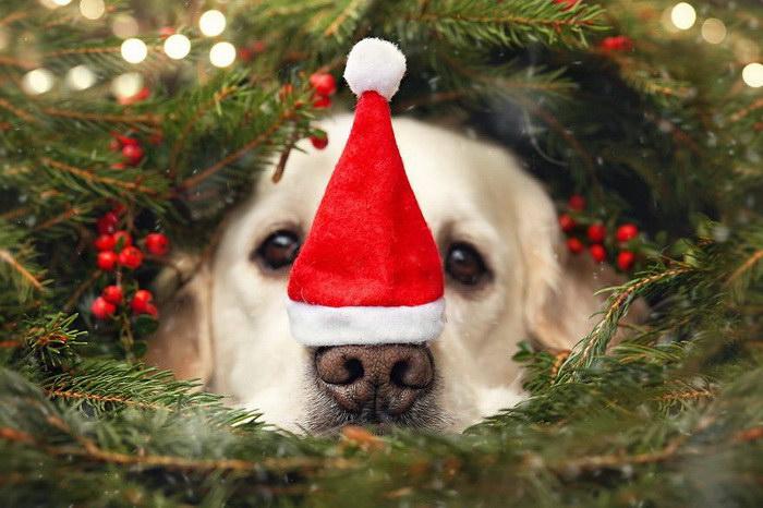 Рождественские пёсики Габи Стиклер (Gabi Stickler) (13 фото)
