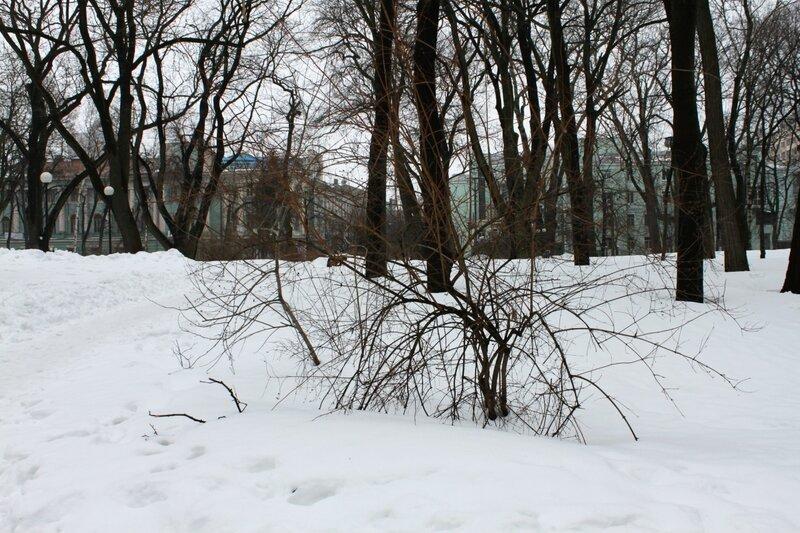 Мариинский парк под снегом