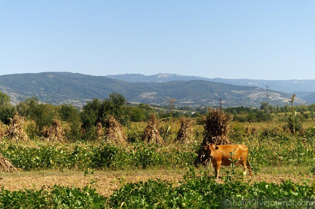 Вид на горы Рача из Имеретии