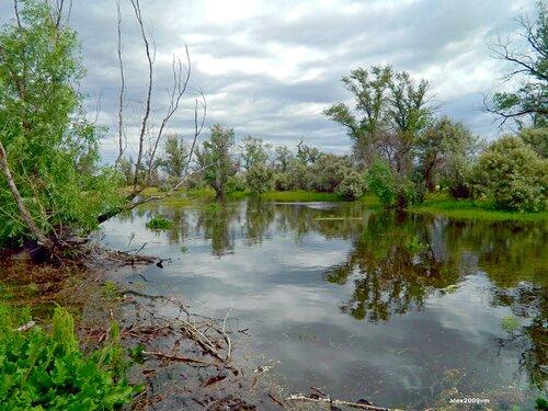 Протока тихо по лесу текла