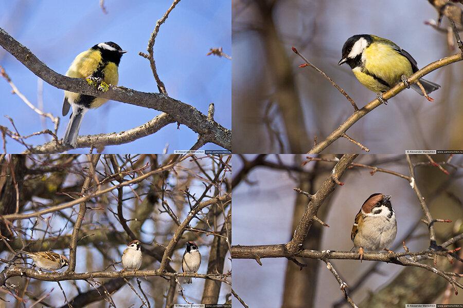 Зимующие птицы | Wintering birds