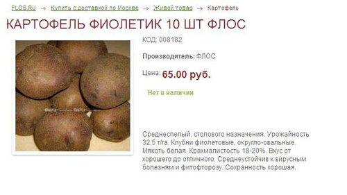 Картофель сорта Фиолетик