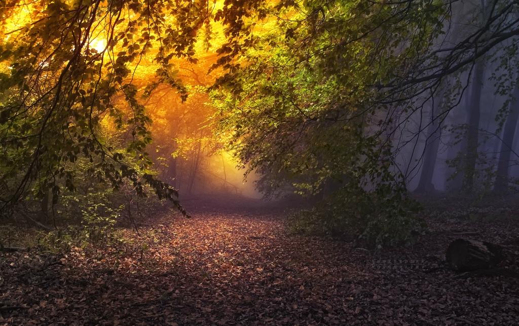 Оригинал взят у trasyy в Сказочный лес.  Фотограф Janek Sedlar Красивая серия работ чешского фотографа Janek Sedlar 2...