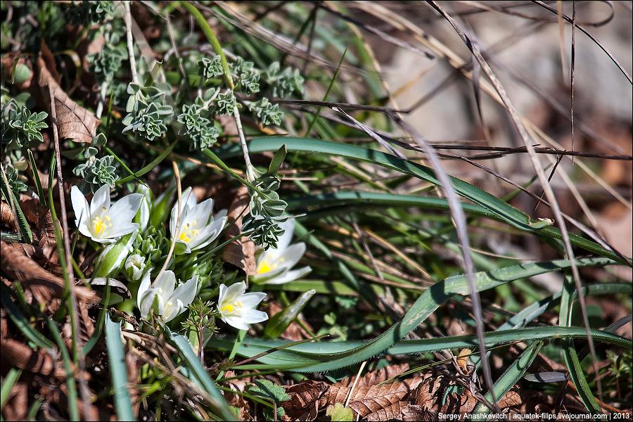 Весенние цветы в крымском лесу