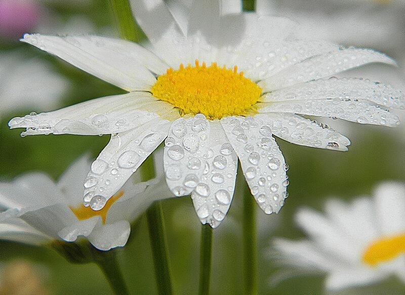 Чистый дождь в заповеднике