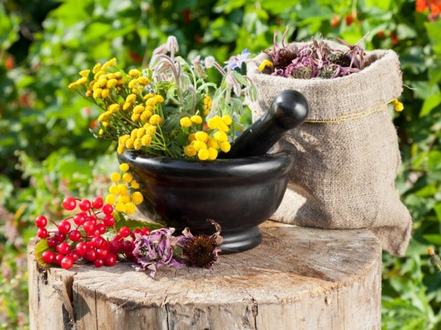 15 целебных растений