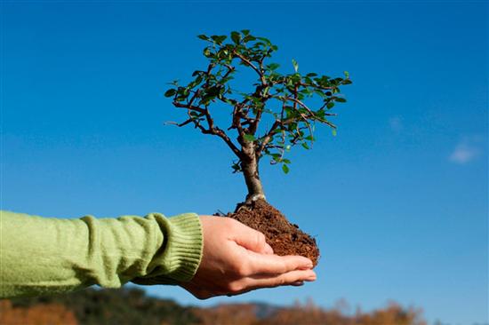 14 мая – Всероссийский день посадки леса