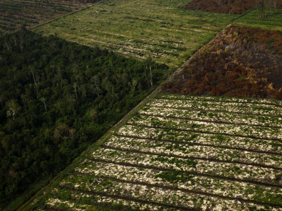 21. Тропический лес Амазонки. (Фото Nacho Doce):
