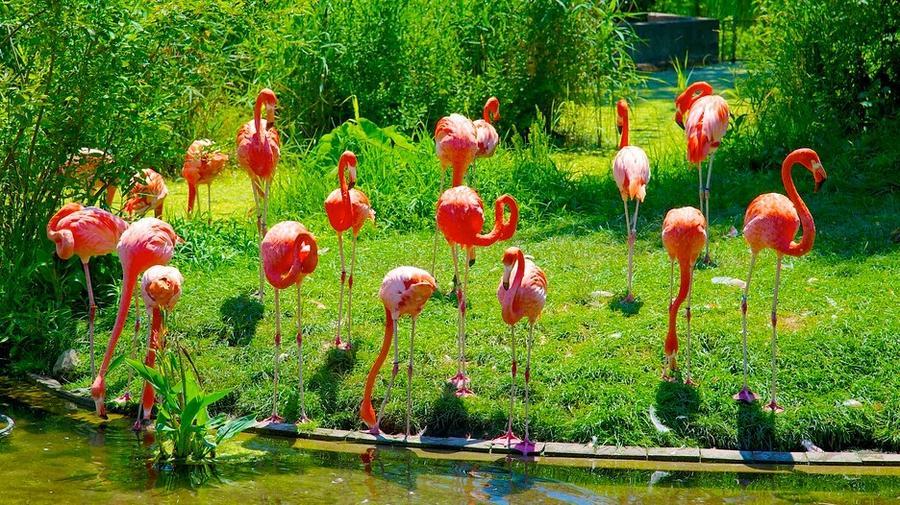 2. Зоопарк Торонто Зоопарк Торонто в Онтарио расположен в живописной Красной Долине Канады. Здесь пр