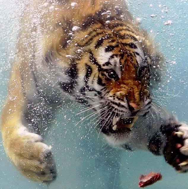 5. Честерский зоопарк Этот зоопарк является самым большим в Соединенном Королевстве и занимает более