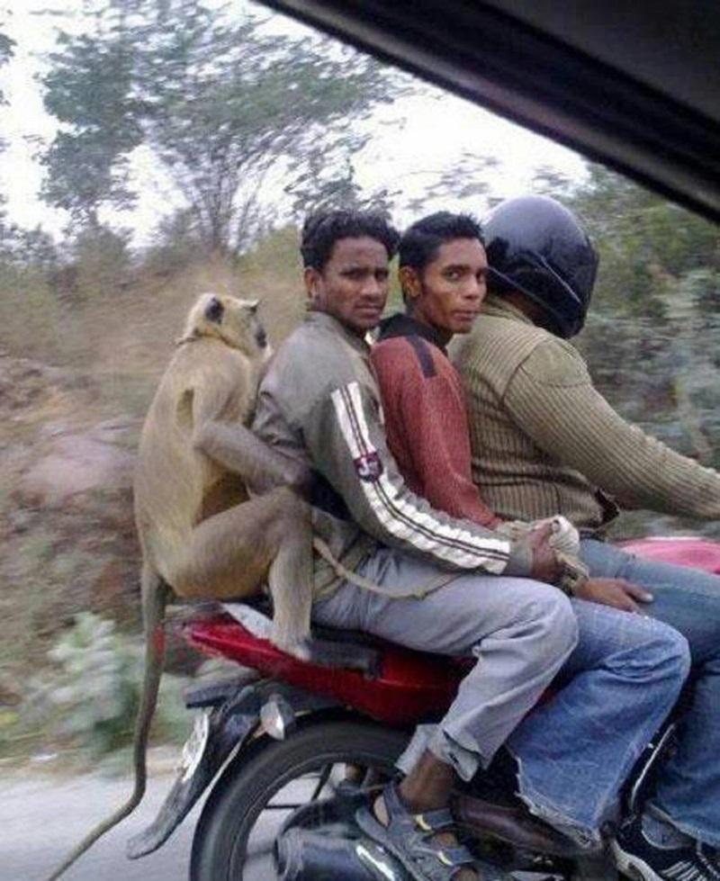 Такое можно увидеть только в Индии
