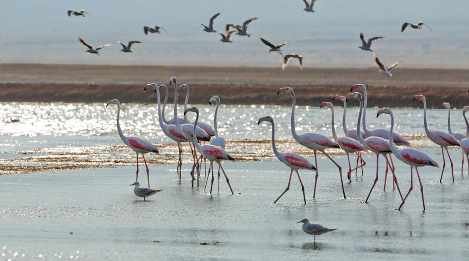 В публичной части парка можно понаблюдать за птичками, узнать о них много всего интересного и посмот