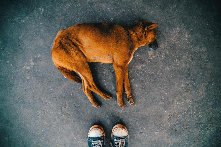 9. Автопортет с флегматичной собакой.