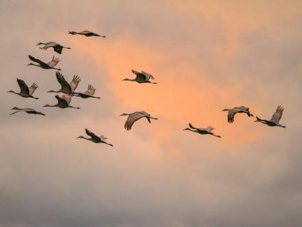Птицы изменили время миграции из-за глобального потепления