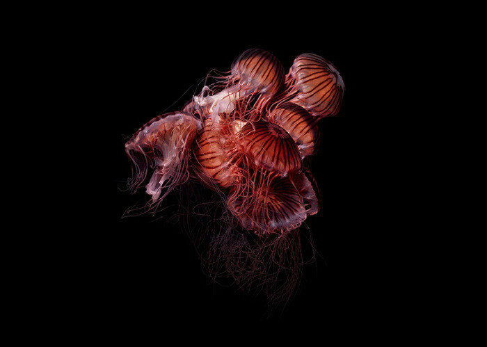 Стеклянные фигуры подводных обитателей