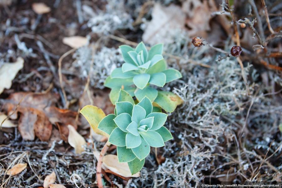 Растения мыса Айя