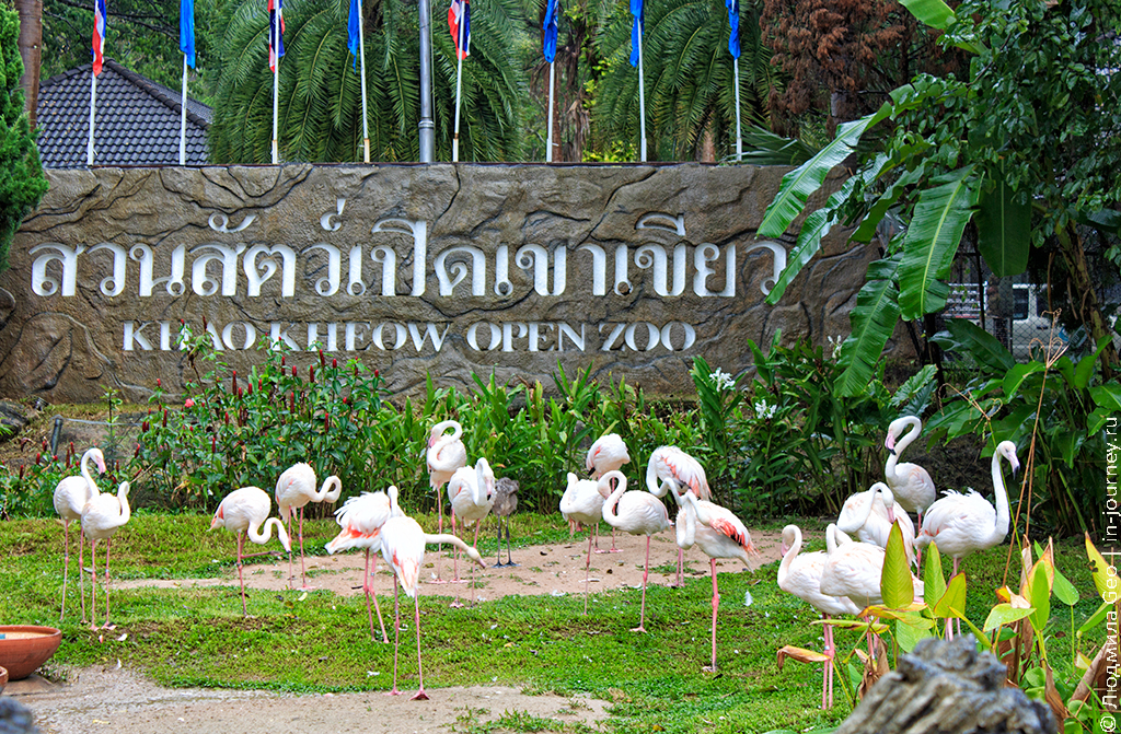 фламинго оопарк khao kheow