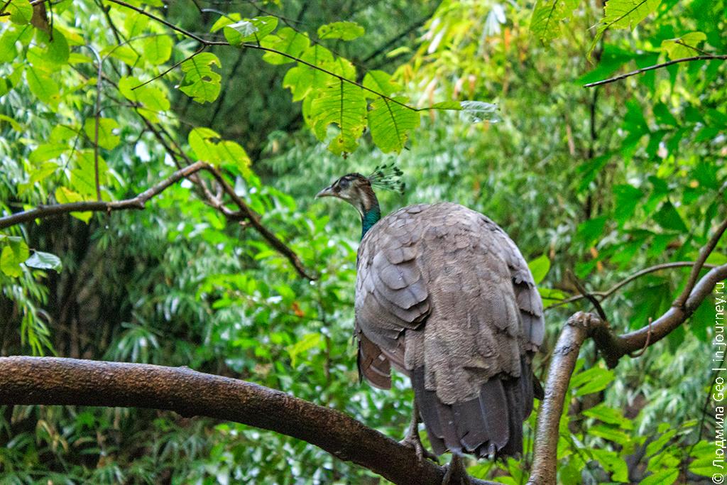 зоопарк в тайланде кхао кхео фото
