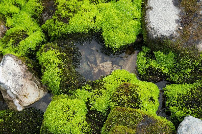 зеленый мох у ручья в тундре Норвегии