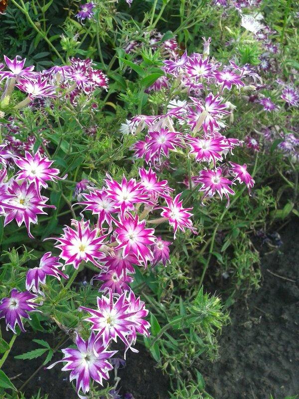 Фото с цветов с клетками