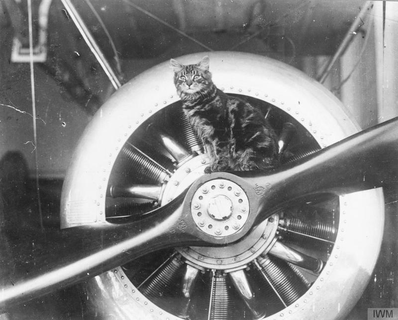 Pincher, the mascot of HMS VINDEX is shown sitting on the propeller of of Sopwith Camel carried by the ship. 1914-1918