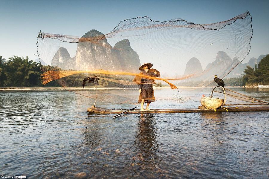 12. Старый рыбак в традиционной одежде забрасывает сеть в реку Ли. Рядом с ним сидит баклан, который