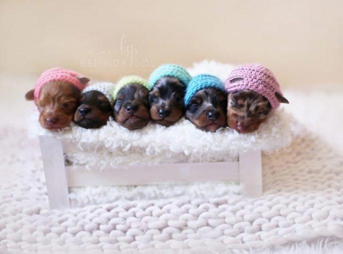 7. Белинда запечатлела их вскоре после рождения, предварительно надев им на голову милые вязаные шап