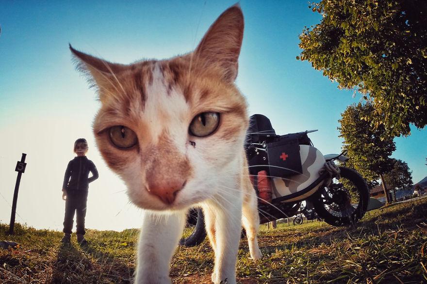 31. Любопытный кот в Италии